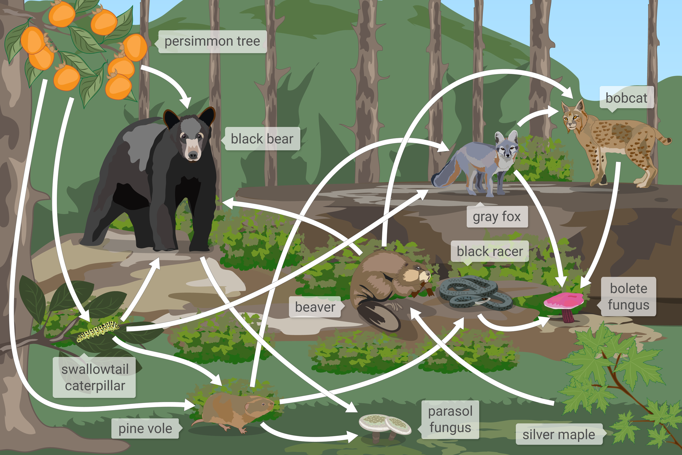 7Th Grade Science Help ixl | interpret food webs i | 7th grade science